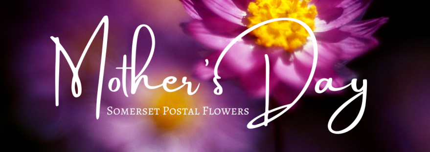 MOthers day flowers somerset postal flowers